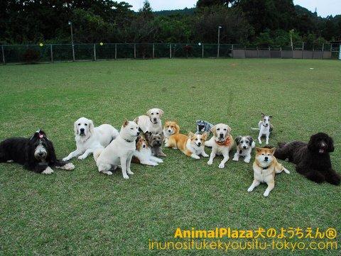 大型犬の集合写真♪