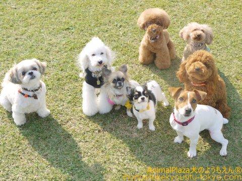 小型犬でパシャリ!!