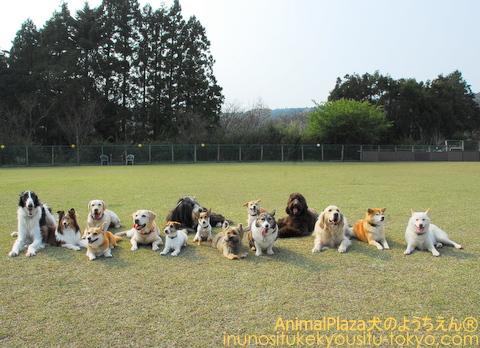 大型犬チーム♪