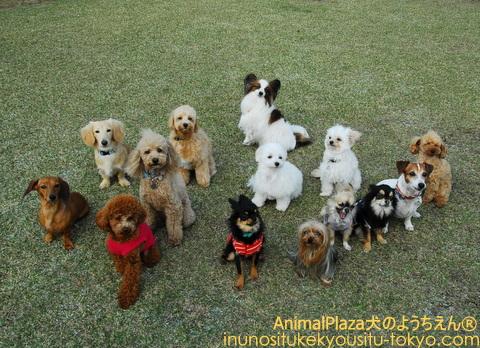 小型犬で集合写真