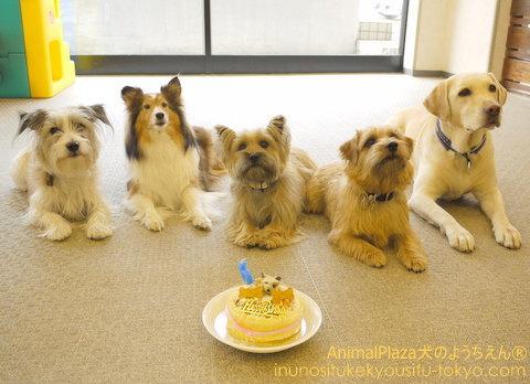 ケーキを囲んで「はい、チーズ★」
