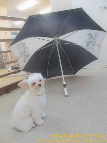 傘の社会化中・・・