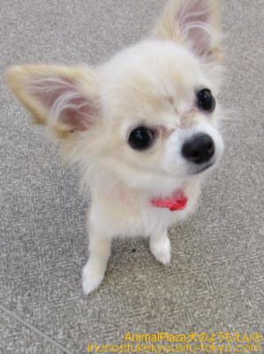 新入生紹介♪子犬のしつけ教室「犬のようちえん駒沢公園教室」