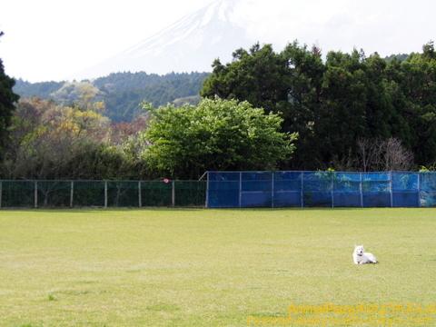 富士山と銀太朗くん!