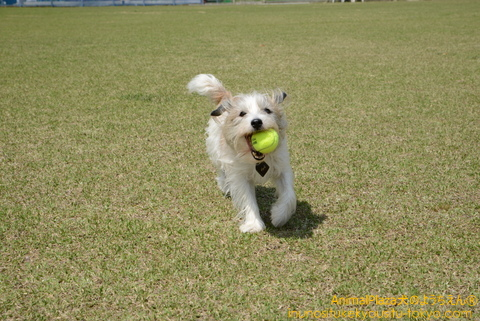 ボール遊び大好きくらのすけくん!
