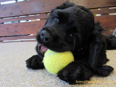 ボール大好きだよー!