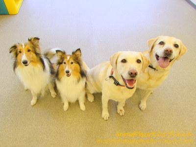 笑顔が眩しい(左から)ハルくん、チェルシーちゃん、ナナちゃん、パティちゃん