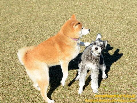 まるでドッグダンス!?マメゾーくん(左)とハリーくん(右)