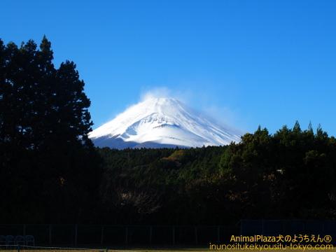 富士山には雪が積もっていましたよー