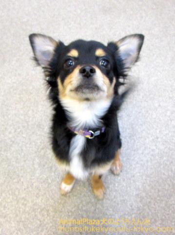 子犬のしつけ教室「犬のようちえん駒沢公園教室」誕生日
