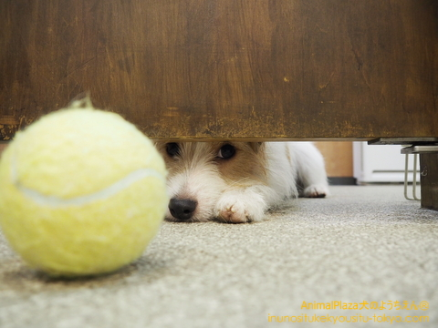 「見てないでボール取ってよ~」