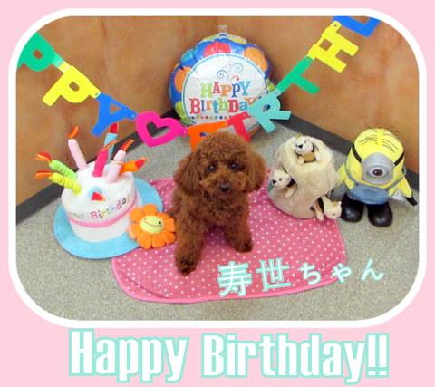 初めてのお誕生日を迎えた寿世ちゃん!おめでとう☆