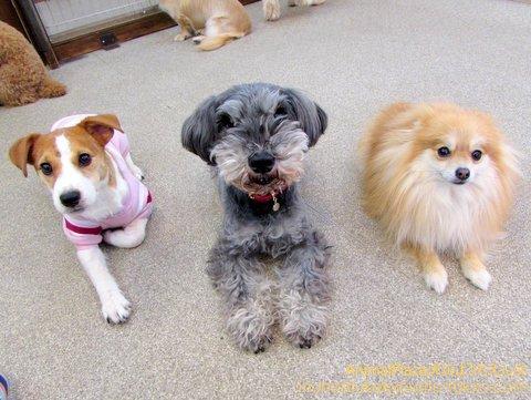子犬のしつけ教室「犬のようちえん駒沢公園教室」お誕生日